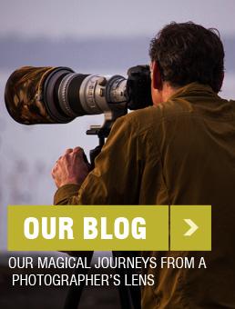 Blog-sidebar