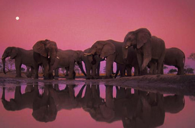 Botswana Journeys - Featuews Africa Safaris