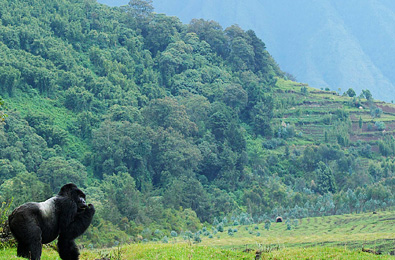 Rwanda-journeys - Features Africa Safaris