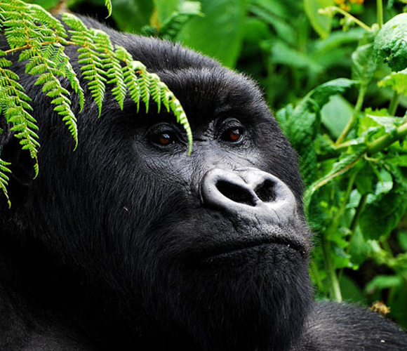 Rwanda-safari Features Africa Journeys