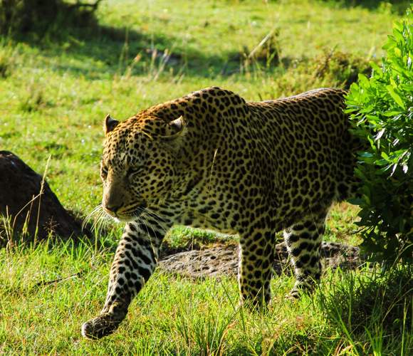 Zambia-safari Features Africa Journeys