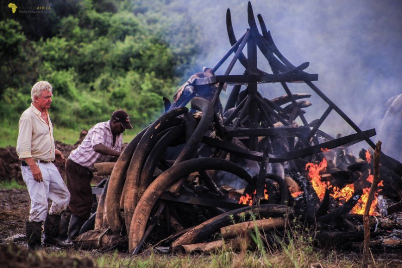 elephant and rhino horns burning kenya