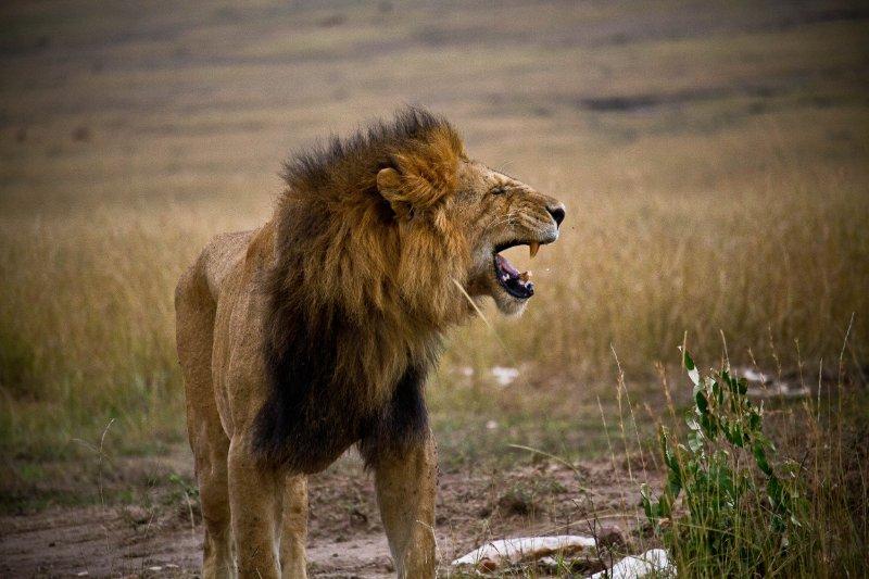 roar under siege