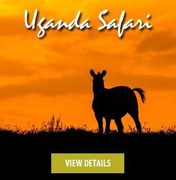 Uganda-safari