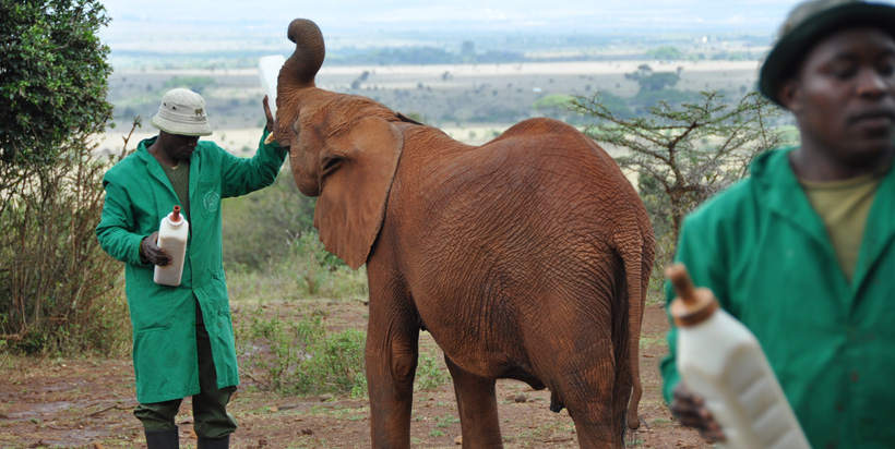 David Sheldrick Elephant Sanctuary 2