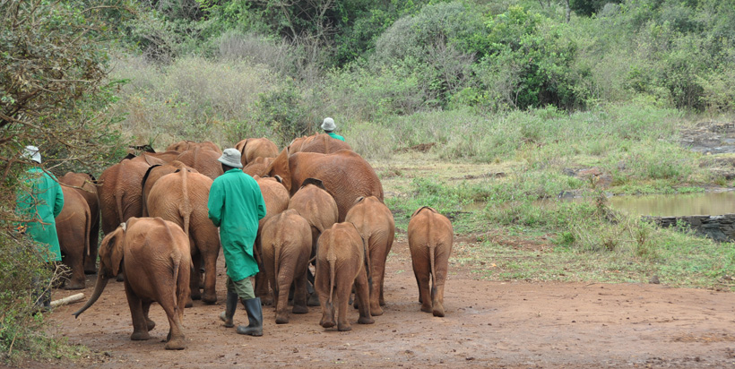 David Sheldrick Elephant Sanctuary 3