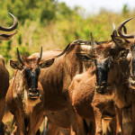 Maasai Mara Special Safari – 3 Days